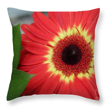 Throw Pillow featuring the photograph Colorburst  by Mary Lou Chmura