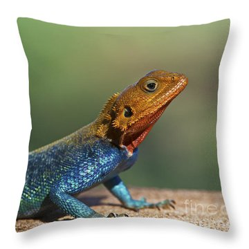 Colorful Awesomeness... Throw Pillow