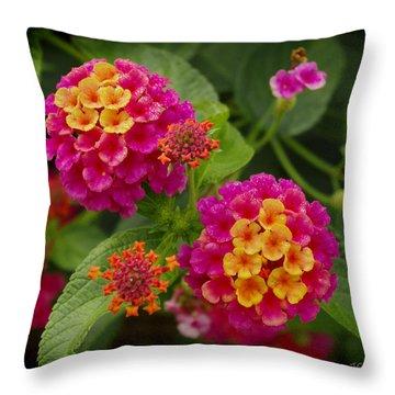 Colorful Lantana  Throw Pillow