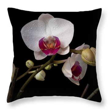 Colorful Moth Orchid Throw Pillow