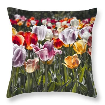 Colorful Tulips In The Sun Throw Pillow