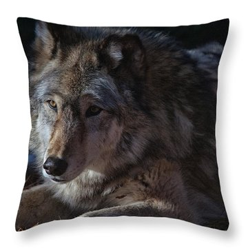 Colors Of A Wolf Throw Pillow by Karol Livote