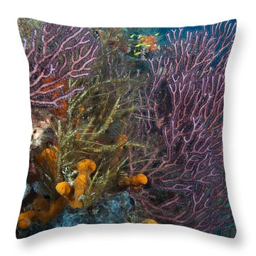 Colors Of Reefs Throw Pillow