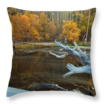 Colors Of The Forest Throw Pillow by Jonathan Nguyen