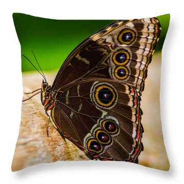 Colour Display Throw Pillow