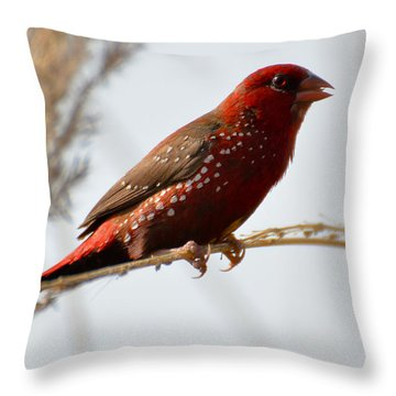 Colour Me Red Throw Pillow by Fotosas Photography