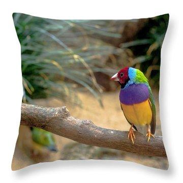 Colourful Bird Throw Pillow by Daniel Precht