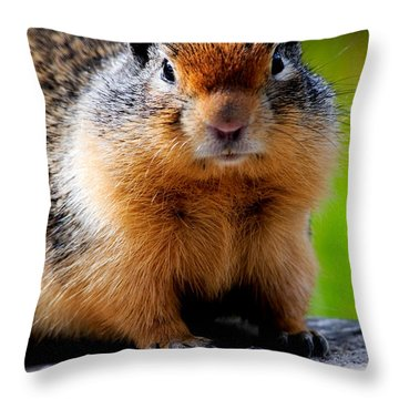 Columbian Ground Squirrel Throw Pillow by Bonnie Fink