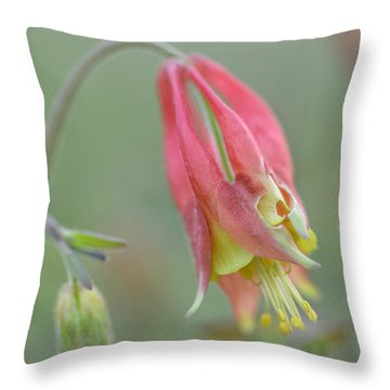 Columbine Softly  Throw Pillow by Debbie Green