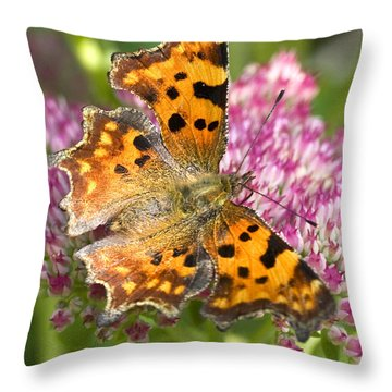 Comma Butterfly Throw Pillow by Richard Thomas