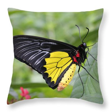 Throw Pillow featuring the photograph Common Birdwing Butterfly by Judy Whitton