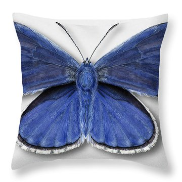 Common Blue Butterfly - Polyommatus Icarus Butterfly Naturalistic Painting - Nettersheim Eifel Throw Pillow