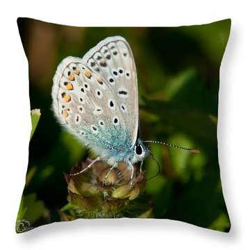 Common Blue II Throw Pillow