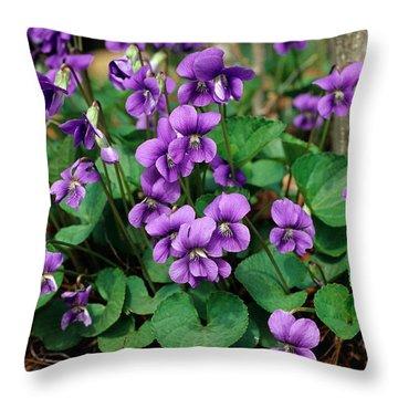 Common Blue Violet Viola Papilionacea Throw Pillow