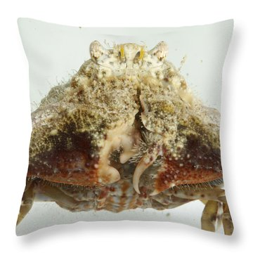 Common Box Crab Throw Pillow