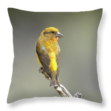 Common Crossbill Loxia Curvirostra Throw Pillow