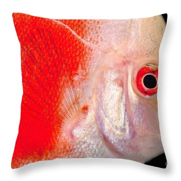 Common Discus Throw Pillow by Dante Fenolio