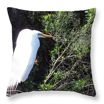 Throw Pillow featuring the photograph Common Egret 000 by Chris Mercer