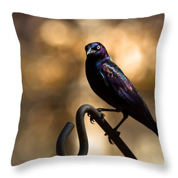 Throw Pillow featuring the photograph Common Grackle by Robert L Jackson