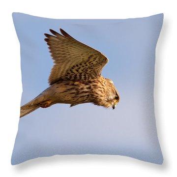 Kestrel Throw Pillows