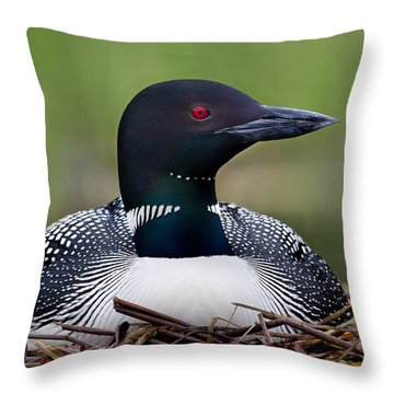 Common Loon On Nest British Columbia Throw Pillow by Connor Stefanison