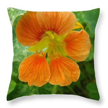 Common Nasturtium Throw Pillow