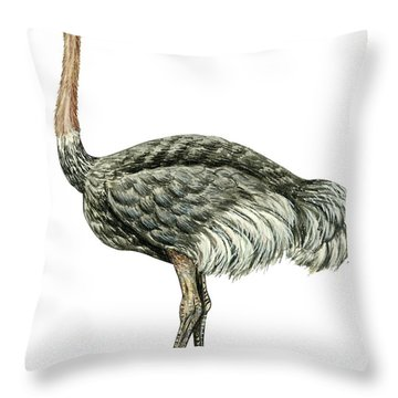 Common Ostrich Throw Pillow by Anonymous