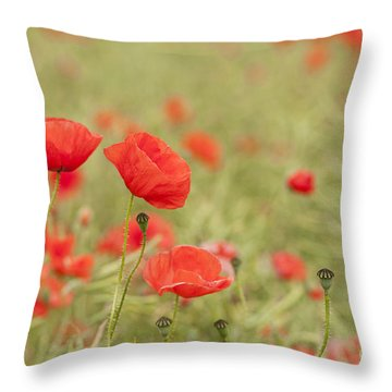 Common Poppies Throw Pillow by Anne Gilbert