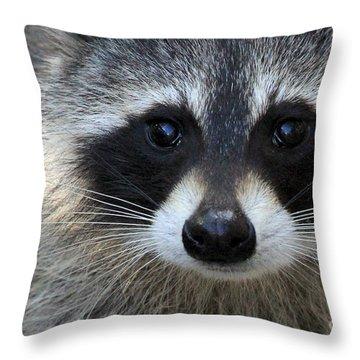Common Raccoon Throw Pillow
