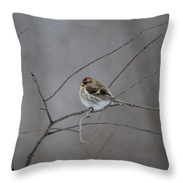 Throw Pillow featuring the photograph Common Redpoll by David Porteus