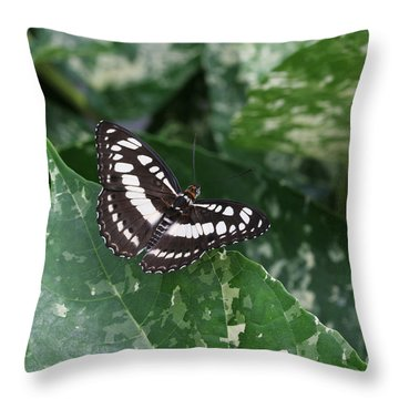 Common Sergeant Butterfly Throw Pillow