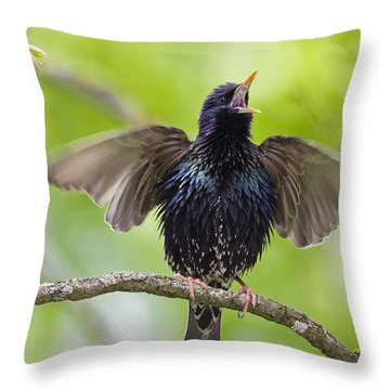 Common Starling Singing Bavaria Throw Pillow by Konrad Wothe