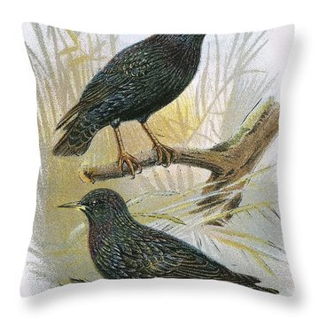 Common Starling Top And Intermediate Starling Bottom Throw Pillow