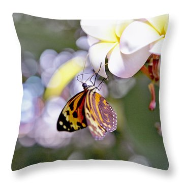 Common Tiger Glassywing Butterfly On Plumeria Bloom Throw Pillow