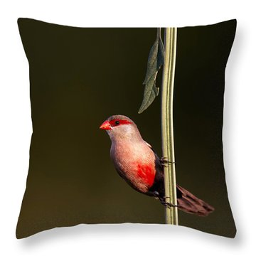 Common Waxbill Throw Pillow