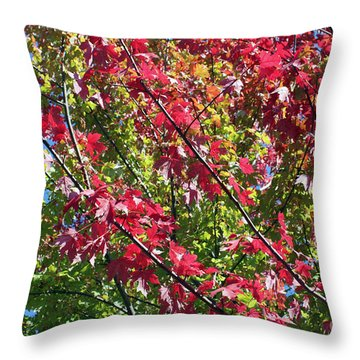 Throw Pillow featuring the photograph Complimentary Colors by Debbie Hart