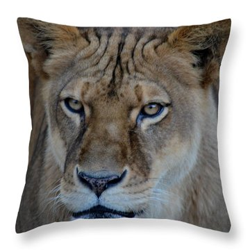 Concerned Lioness Throw Pillow