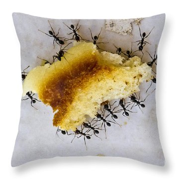 Concerted Action Throw Pillow by Heiko Koehrer-Wagner