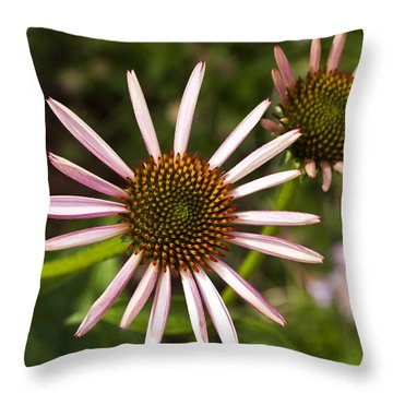 Cone Flower - 1 Throw Pillow by Charles Hite