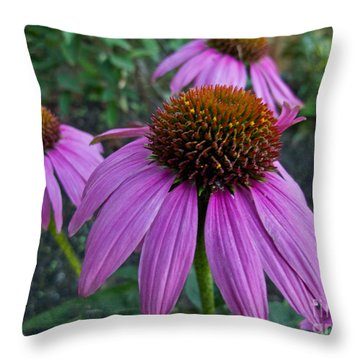 Cone Flower Beauty Throw Pillow