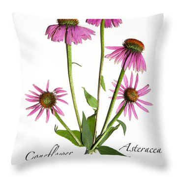 Coneflower 5 Throw Pillow