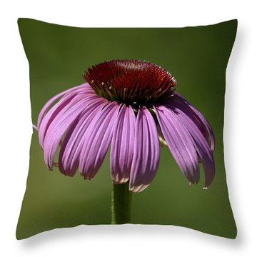 Coneflower Throw Pillow by Randy Bodkins