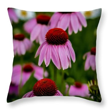 Coneflowers In Front Of Daisies Throw Pillow
