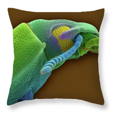 Tenebrionidae Throw Pillows