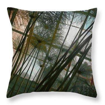 Conservatorybwindow Throw Pillow by David Klaboe