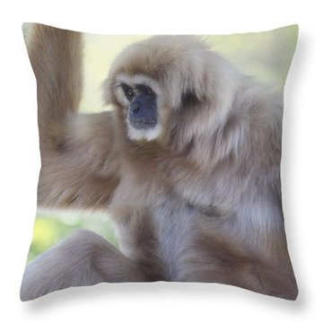 Contemplating Gibbon Throw Pillow by Melanie Lankford Photography