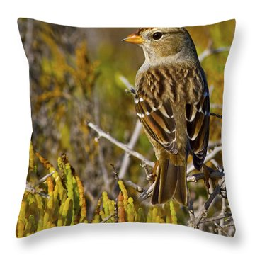 Throw Pillow featuring the photograph Contemplating The Day by Gary Holmes