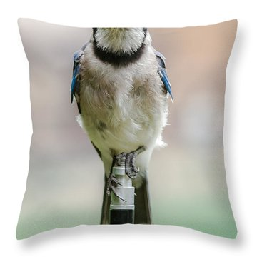 Contemplative Blue Jay Throw Pillow
