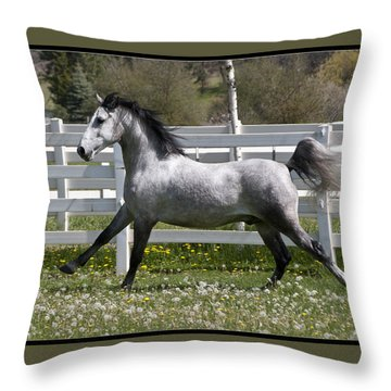 Throw Pillow featuring the photograph Conversano Catalina IIi D4000 by Wes and Dotty Weber