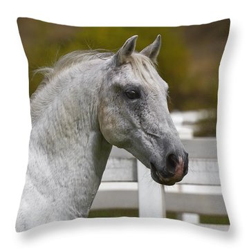 Throw Pillow featuring the photograph Conversano Mima D2724 by Wes and Dotty Weber
